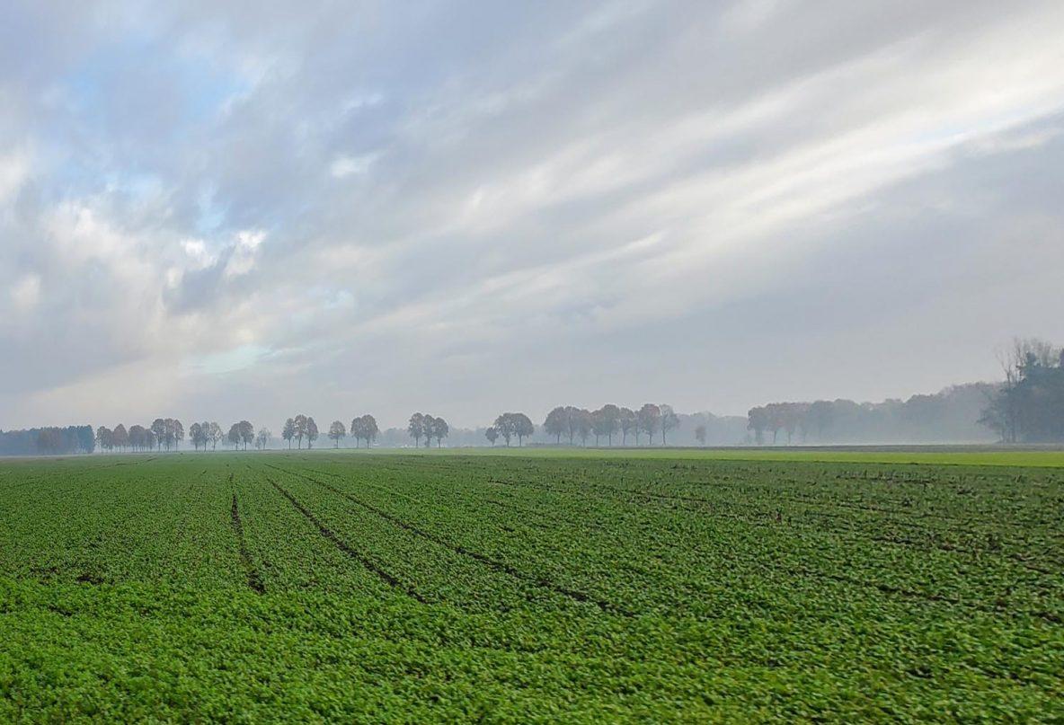 Scenery near Bergeijk